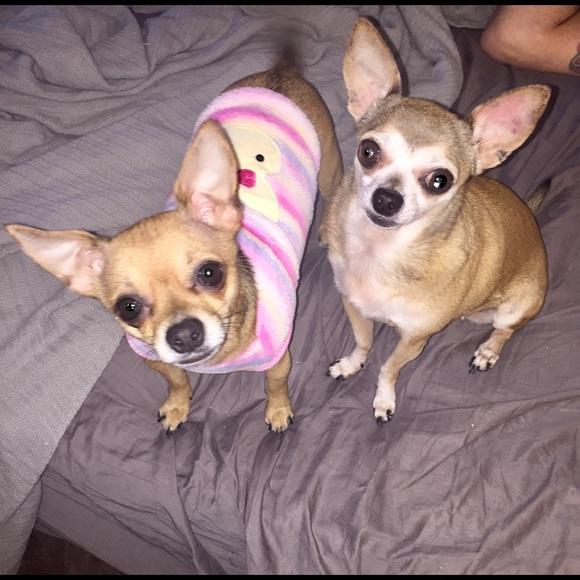 super popular 85199 42baf M DOG CLOTHES Fleece Sweater Pink Bunny M NWT NWT